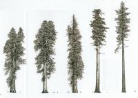 plunge 09.30 trees