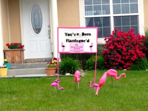 Flamingoe'd