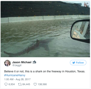 Twitter Shark on Houston Freeway